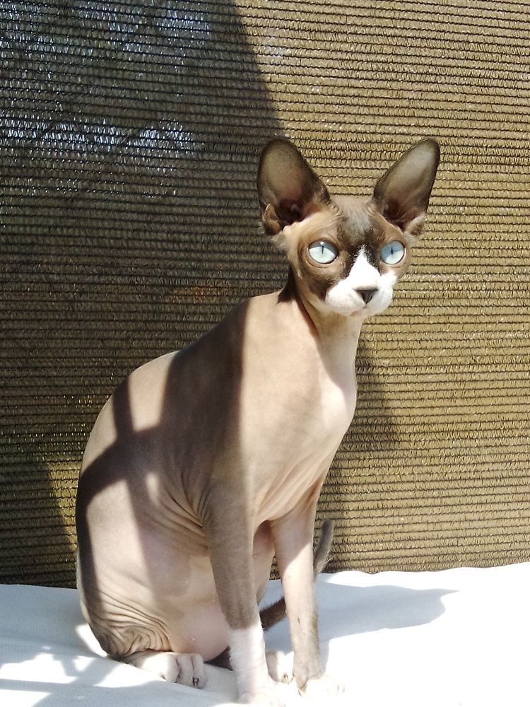 Kotka Rina whotelu dla kotów Kotel
