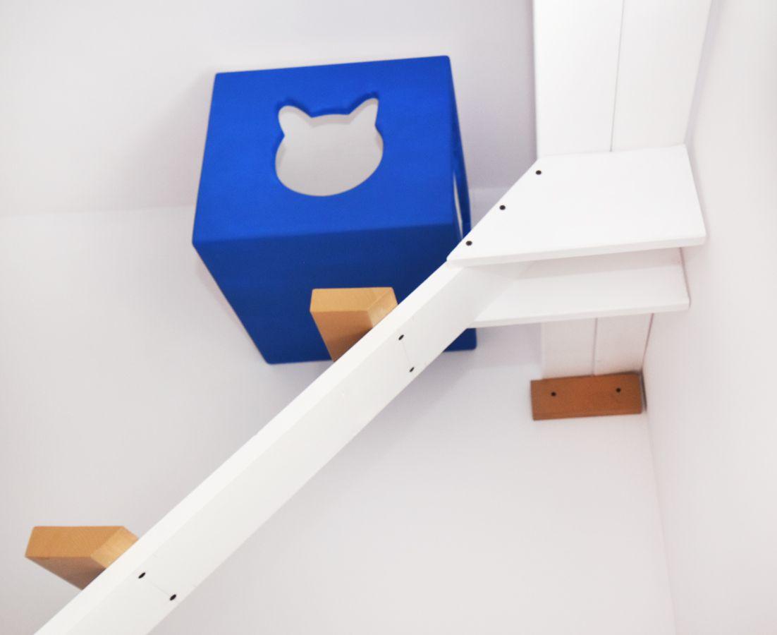 niebieska budka dla kota