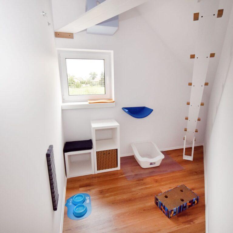 Pokój dla kota z niebieskimi akcesoriami