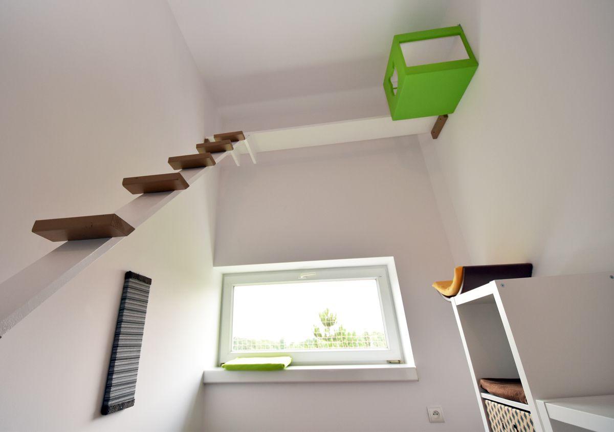 Pokój dla kota z zabezpieczonym oknem, drabinką i wiszącą budką