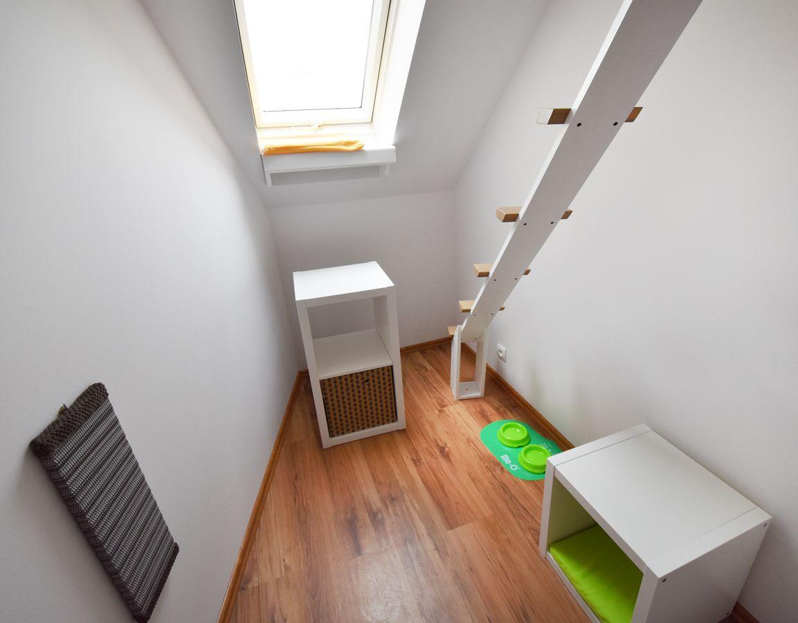 Pokój dla kota z zielonymi akcesoriami