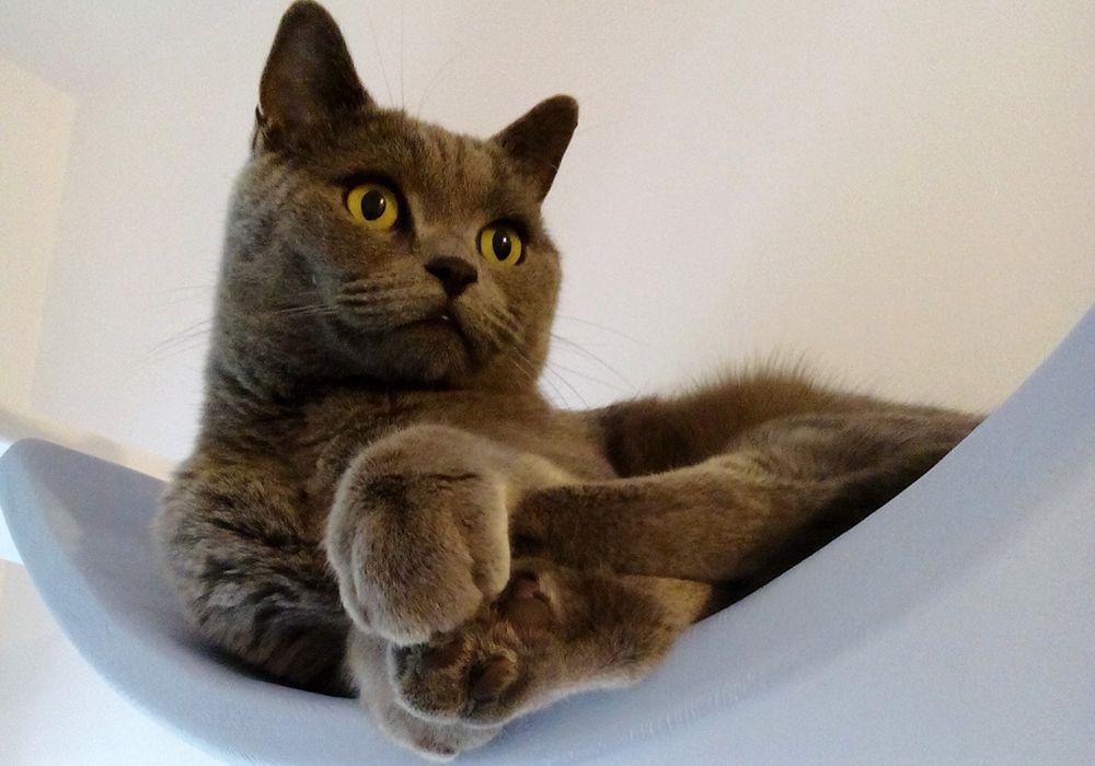 Borys w hotelu dla kotów Kotel