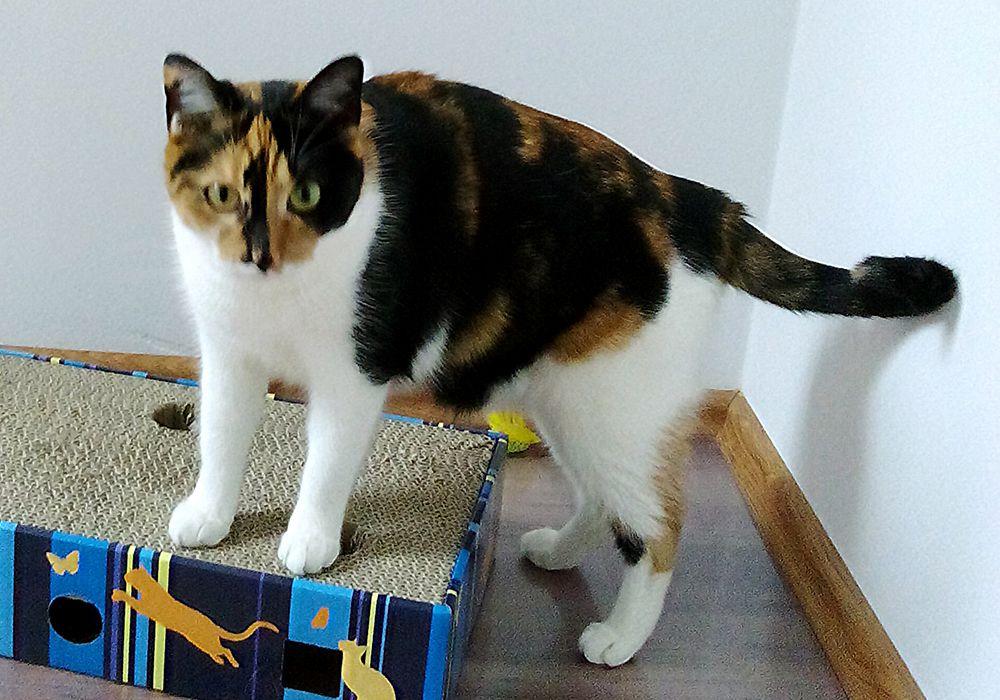 Maja kotka w hotelu dla kotów